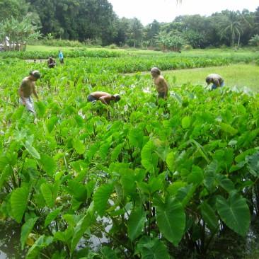 Kapahu Living Farm