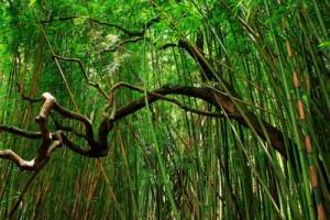 Maui's Best Hiking Trails
