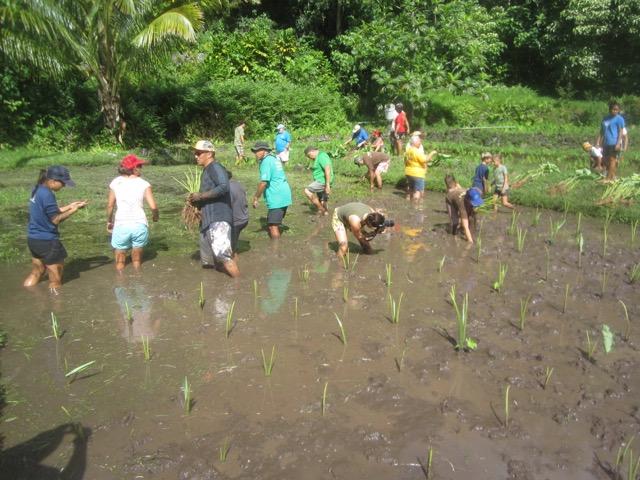 Kapahu Farm Workday May 1