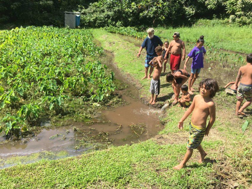 Kapahu Farm Days for Keiki over Winter Break